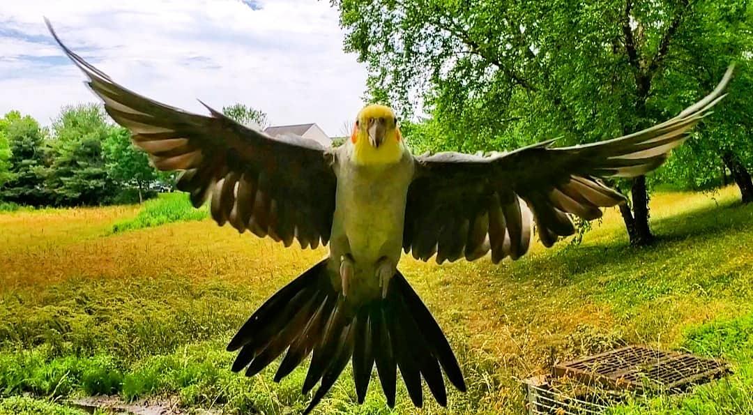 www.parrotvolancy.com