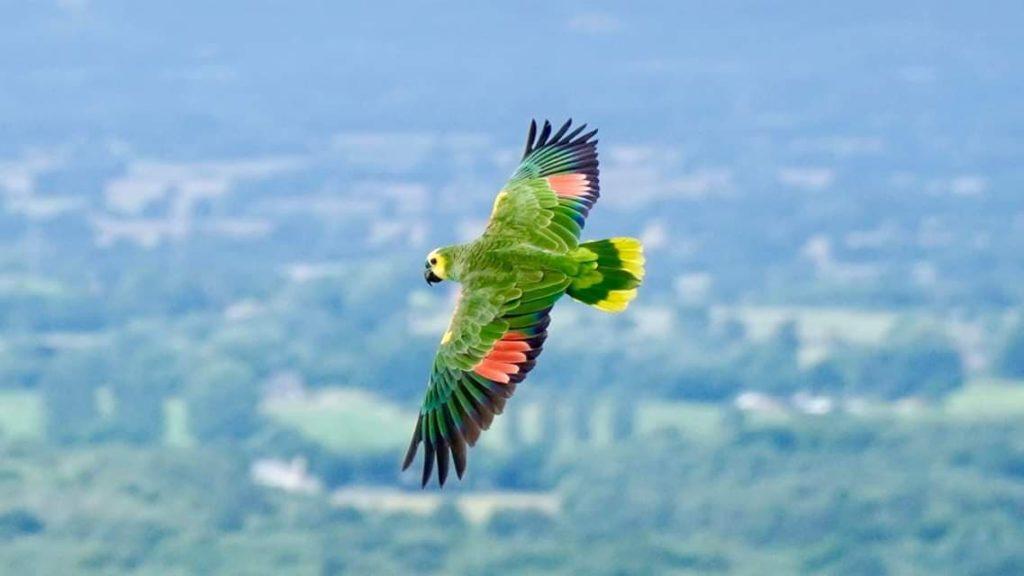 parrotvolancy.com